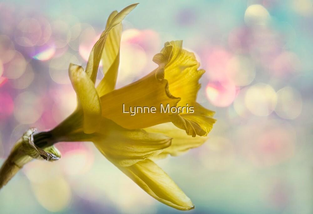 Spring Is In The Air by Lynne Morris