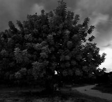 The Carob Tree by AndyCh
