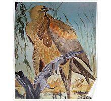 Wedge Tailed Eagle - bird of prey - Australia Poster