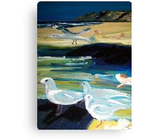 Silver Gulls - Australia Canvas Print