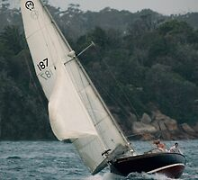 0049  187 Indigo - on Sydney Harbour by Hazel Hogarth