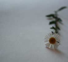 Little daisy by fourthangel