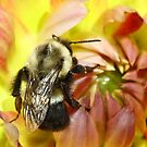 Bumble Bee by john forrant