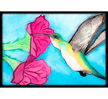 Green hummingbird  Photographic Print