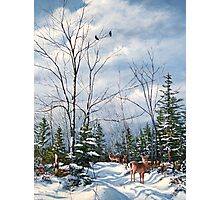 """Whitetail Alert"" Photographic Print"