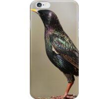 Iridescent Starling, iPhone Case/Skin