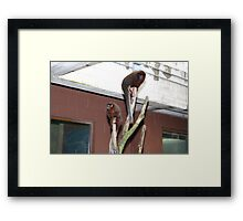 two's compeny Framed Print