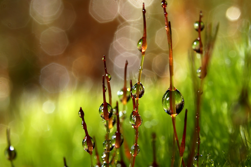 Moss Sparkles by Sharon Johnstone