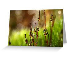 Moss Sparkles Greeting Card