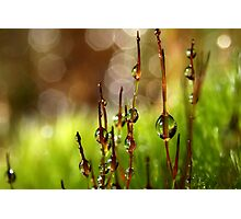Moss Sparkles Photographic Print