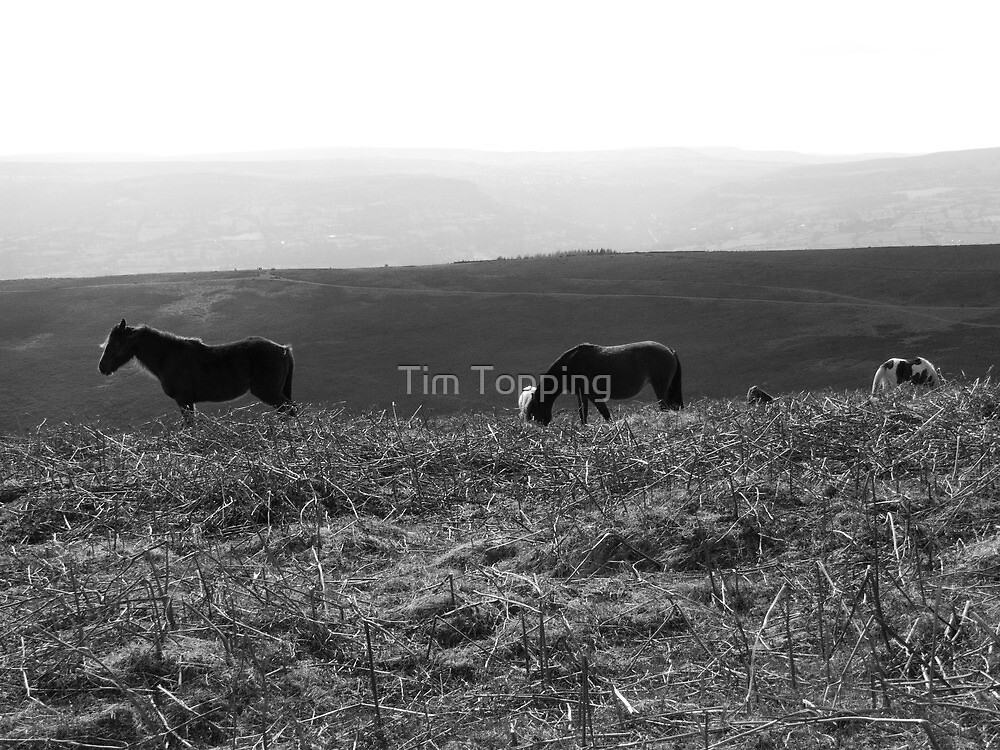 Black Mountain Ponies by Tim Topping