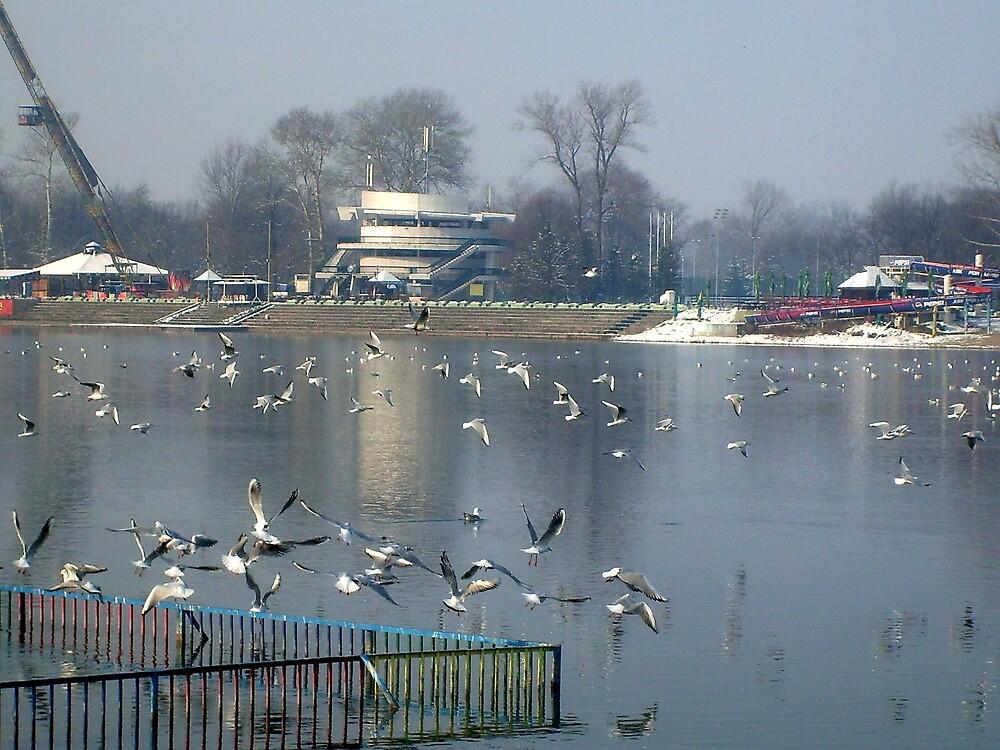 River seagulls by Ana Belaj