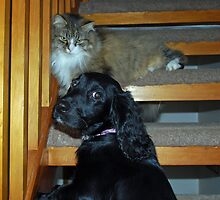 Mum...he wont let me go up the stairs by emanon