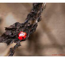Ladybird 2 by Wayniac