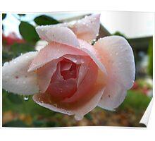 Garden Bloom Poster