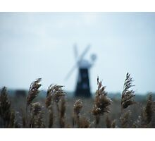 marsh grass in the wind Photographic Print
