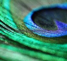 Peacock Feather - Abstract Macro Photograph by ameliakayphotog