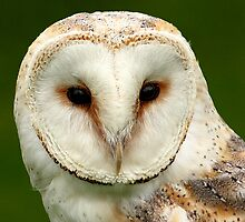 Barn Owl Close Up. by Mark Hughes