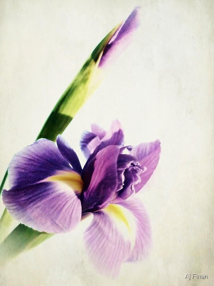 Purple Iris. by Aj Finan
