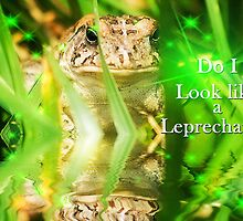 Do I look like a Leprechaun? by Trudy Wilkerson