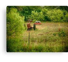 Dog in a Field Canvas Print