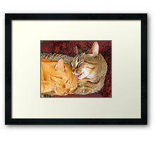 Momma Cat Framed Print