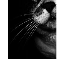 02-25-2011  My Cat's Nose Photographic Print