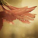 blush by Angel Warda