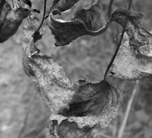 Grape Leaves- Black and White by Tracy Wazny
