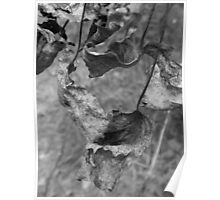 Grape Leaves- Black and White Poster