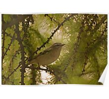 Golden Crowned Kinglet Poster