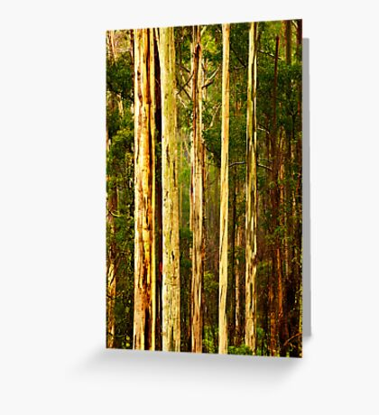 Wet Mountain Ash Trees Greeting Card