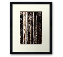 Mountain Ash in Spring Framed Print
