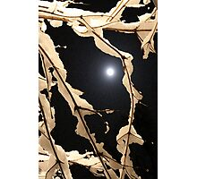 Ladyfingers Dipped in Moonlight Photographic Print