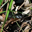 Snake in the Grass by salsbells69