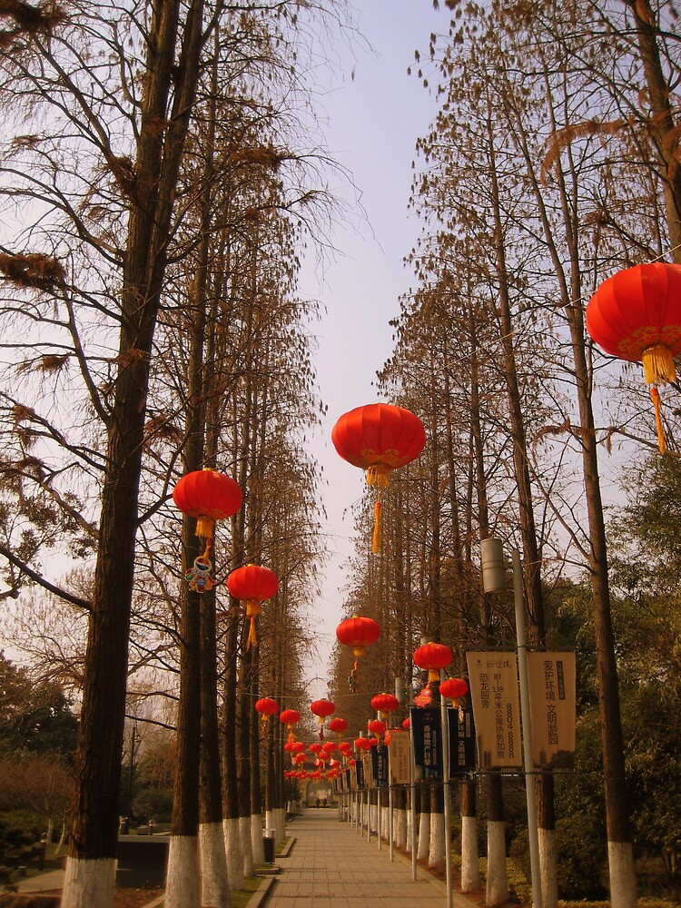 Red lanterns, Changzhou Park by Chris Millar