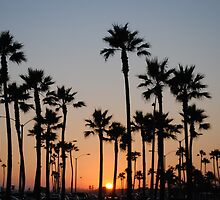 California palms on beachfront by bethischeery