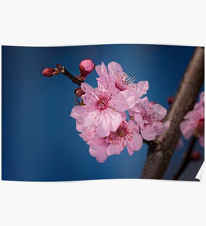 The first flowers of Spring Poster