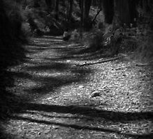 Shadows on the Path by Ben Loveday