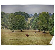 Cow in Field Poster