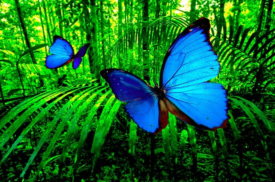 Butterfly Deam III by Anthony Boccaccio