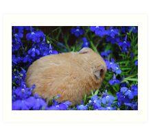 hamster sleeping in flower bed Art Print