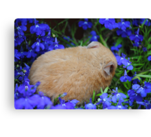 hamster sleeping in flower bed Canvas Print