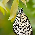 Paper Kite Butterfly by Tracey  Dryka
