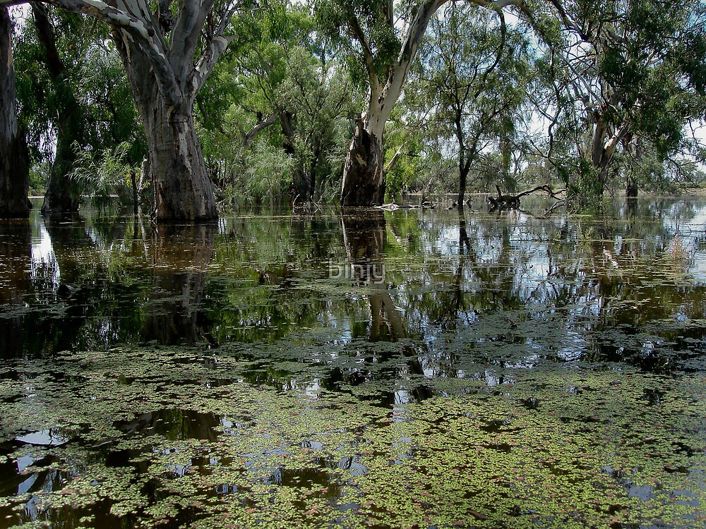 darling  river anabranch , in flood by binjy