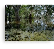 darling  river anabranch , in flood Canvas Print