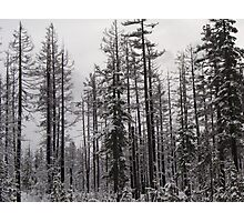 Winter in the Forest Photographic Print