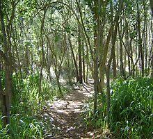 Hawaii Forest by ka7bzg