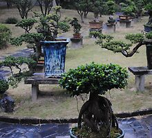 Bonsai/Bonzai trees in China by bethischeery