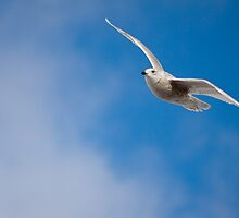 Fly High by Stephen Rowsell